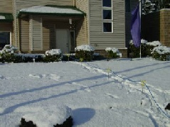 Yardsticks Holding a Carpet Cleaning Solution Hose above the Snow